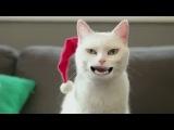 поздравления кота с наступающим новым годом